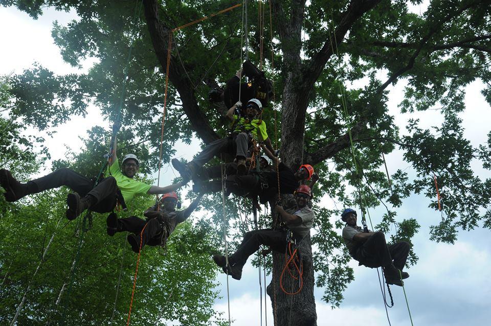 crew-in-tree
