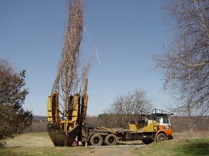 Tree Moving & Planting